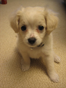 Meet_Truffle!